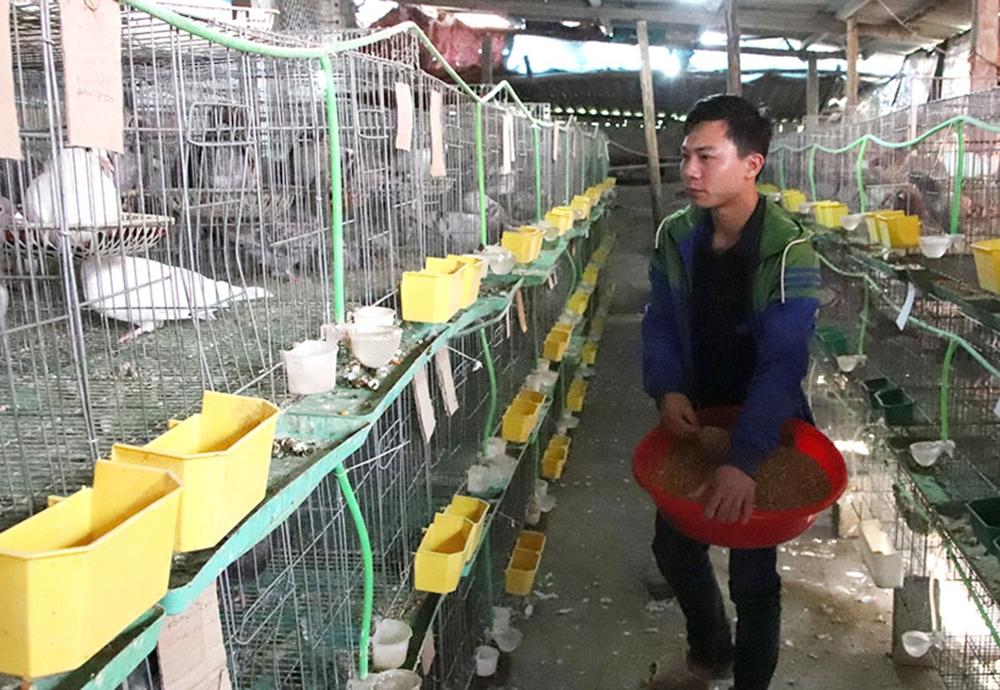 Chi, tổ hội nông dân nghề nghiệp: Mô hình phù hợp, hoạt động hiệu quả - Ảnh 2.