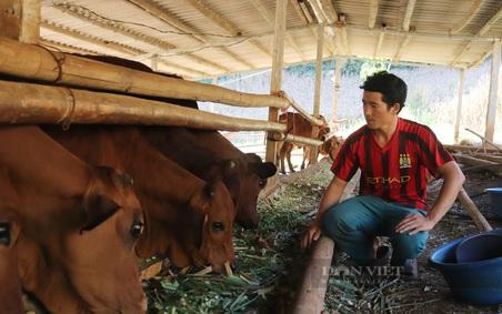 """Chàng trai dân tộc Mông về làm giàu trên vùng đất """"chó ăn đá gà ăn sỏi"""""""