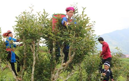 Bài học kinh nghiệm trong thực hiện Chương trình mục tiêu quốc gia giảm nghèo bền vững ở Hà Giang